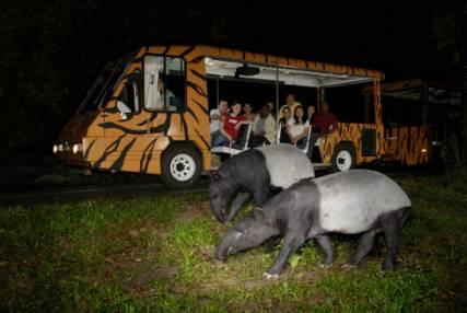 f:新加坡night safari夜间野生动物园.jpg