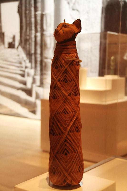 古埃及手工艺品,以及4具人体木乃伊和两具动物木乃伊