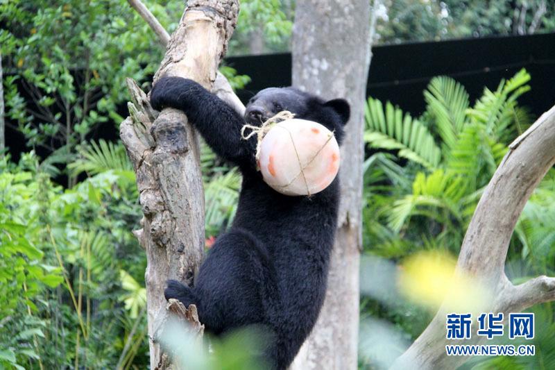 新加坡夜间野生动物园欢庆成立20周年