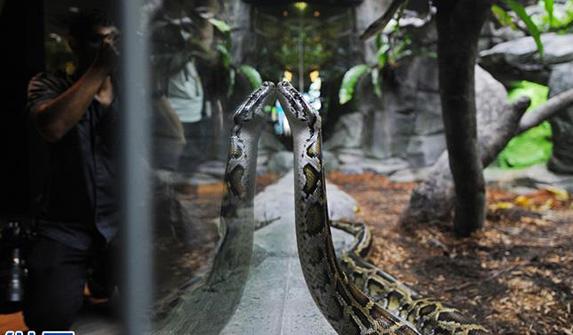 新加坡動物園將重新開放爬行動物展區